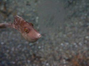 クラゲを召喚するハゲ
